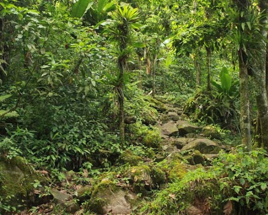 St. Lucia Gros-Piton-St-Lucia-Trail vegetation