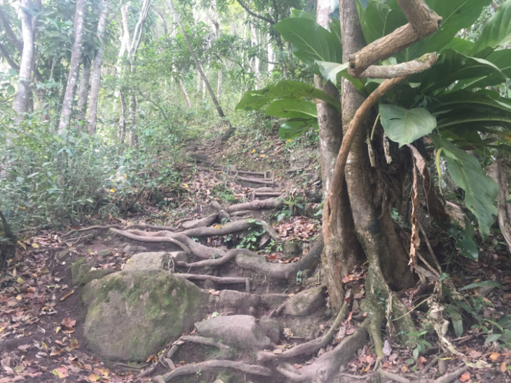 St. Lucia gros piton trail pic