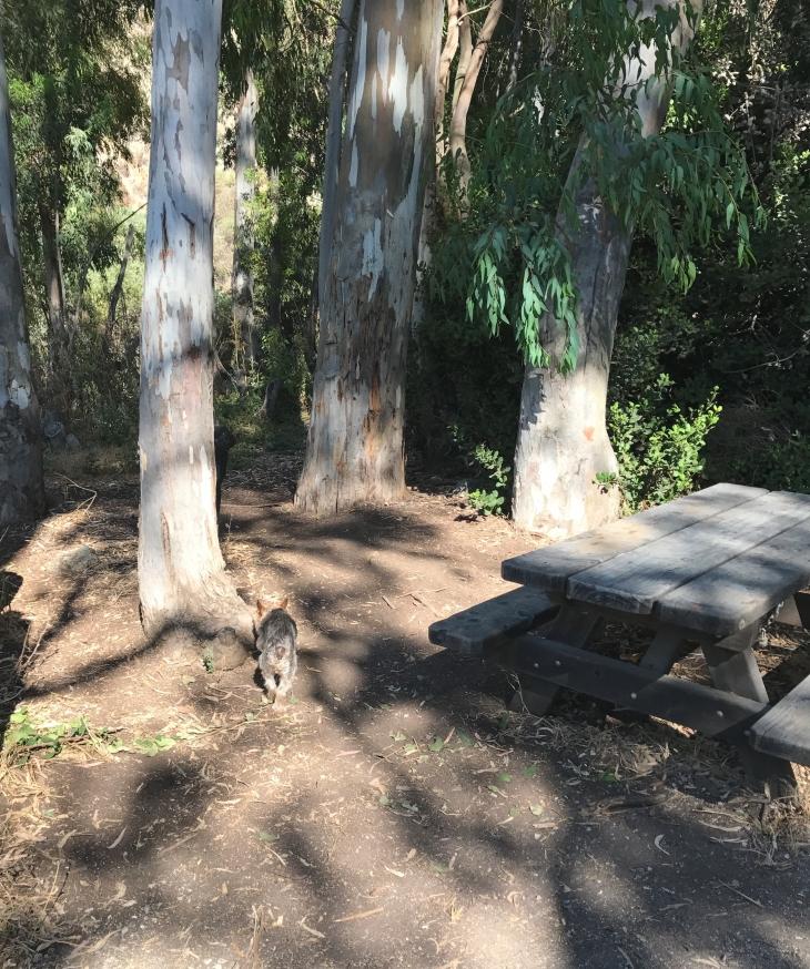 Hill Canyon entrance picnic table