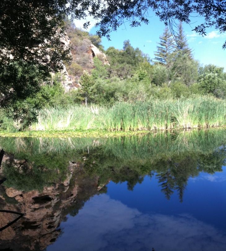 Malibu creek beauty